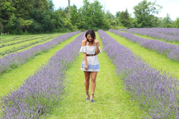 Terre Bleu Lavender Farm Header