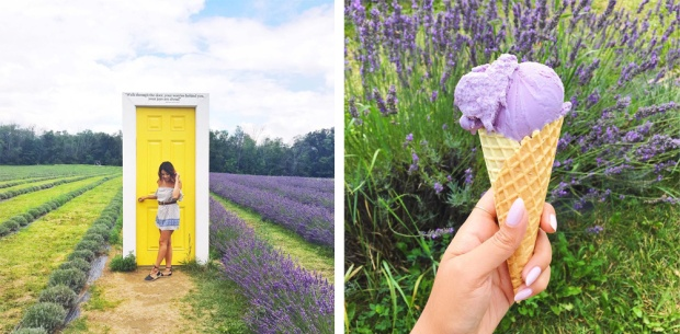Terre Bleu Lavender Farm Instagram